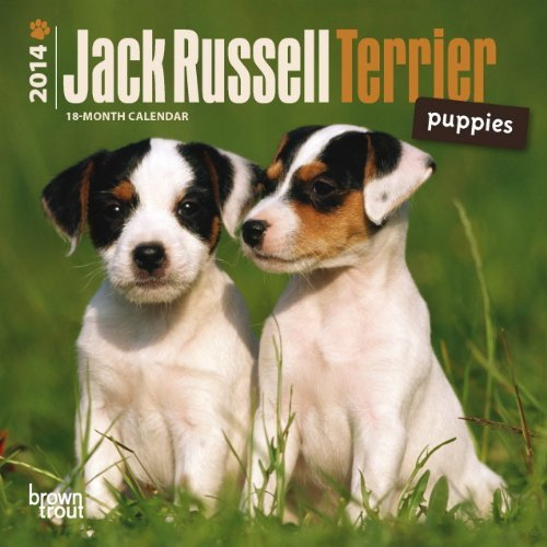 By BrownTrout - Jack Russell Terrier Puppies 2014 Mini for sale  Delivered anywhere in Canada