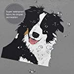 """Perfect Appearance Border Collie Shower Curtain 7-12 Grommet Holes Waterproof Thick Bathroom Plastic Shower Curtains 48"""""""" W X 72"""""""" H No Chemical Odor Rust Proof Grommets 10"""