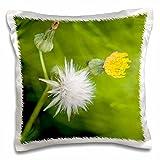Danita Delimont - Flowers - WA, Redmond, Tansy Mustard, Flower - US48 JWI2148 - Jamie and Judy Wild - 16x16 inch Pillow Case (pc_96163_1)