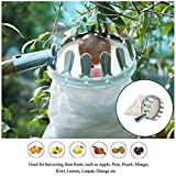 Fruit Picker SunJolly Convenient Labor Saving Practical Horticultural Useful Gardening Apple Pear Peach Picking Tools