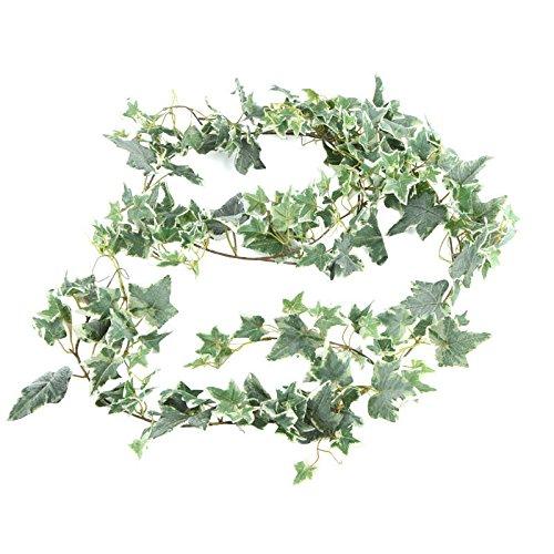 english ivy bush - 6