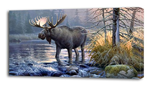 moose pictures - 6