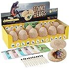 考古科学STEM玩具套装,恐龙蛋挖掘工具包12个