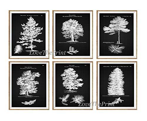 Pine Tree Print Set of 6 Prints Antique Beautiful Botanical Trees Pine Cone Home Room Decor Wall Art Unframed LOD