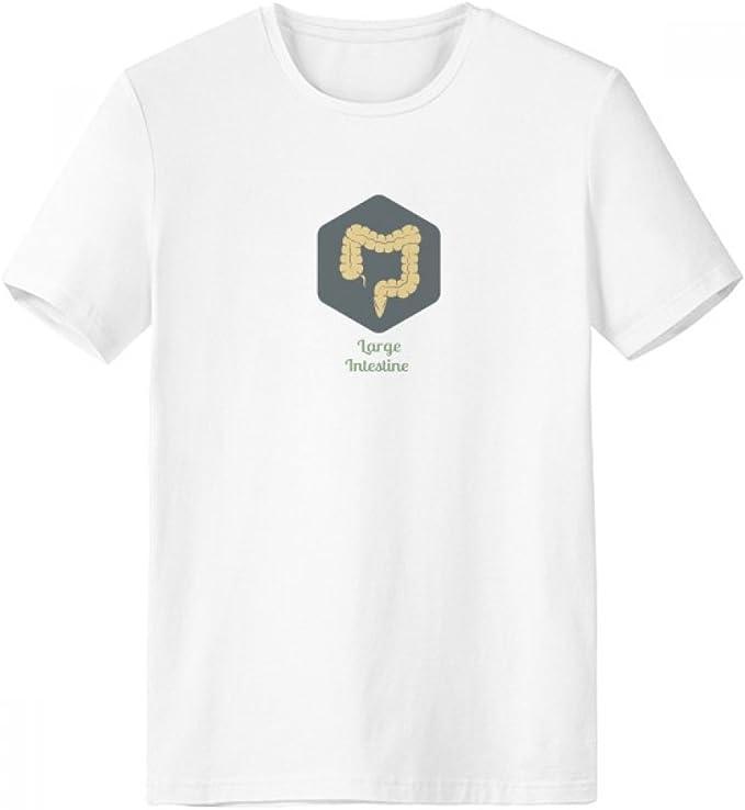DIYthinker Los órganos del cuerpo Intestino grueso con cuello redondo de la camiseta blanca de manga corta Comfort camisetas deportivas de regalos - Multi -: Amazon.es: Ropa y accesorios