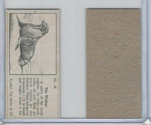 T0-0 Typhoo Tea, Wild Animals, 1955, 18 Walrus