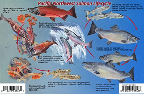 (Pacific Northwest Salmon Lifecycle & Identification Guide Franko Maps Laminated Card)