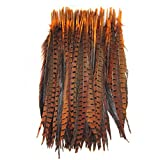 KOLIGHT Set of 500pcs Natural Dyed Pheasant Tails Feathers 12-14 Inch DIY Decoration (Orange)