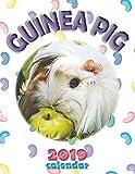 Guinea Pig 2019 Calendar