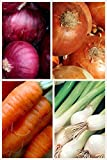 buy Organic Short Day Onion 2 Pack Onion Seeds 800 Seeds UPC 656793277213 Red Cipollini Onion, Yellow Sweet Spanish, Evergreen Bunching now, new 2018-2017 bestseller, review and Photo, best price $5.99
