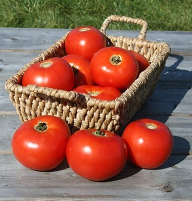 David's Garden Seeds Tomato Slicing Mountain Fresh Plus D3808CZ (Red) 25 Hybrid Seeds