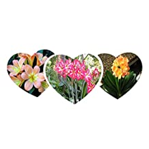 Sale! Free Shipping 1000pcs 10 kinds Bonsai Clivia Seeds 100% Genuine Organic Blooming Flower Seeds Garden Plant