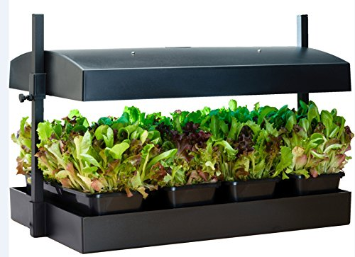 Grow Light Garden And Tray in US - 4