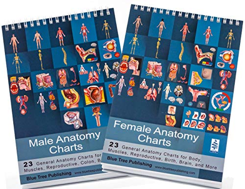 Female and Male Anatomy and Reproductive Flip -