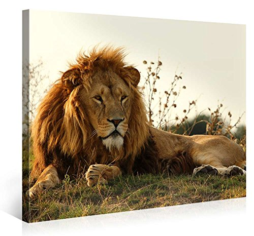 Art Supply Store Miami (Large Canvas Print Wall Art - Majestic Lion - 40x30 Inch Animal Canvas Picture Stretched On A Wooden Frame - Giclee Canvas Printing - Hanging Wall Deco Picture /)