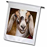 Susans Zoo Crew Animals Farm Goat - Nubian Dairy Goat Doe White Stripe Caprine sq - Flags - 18 x 27 inch Garden Flag