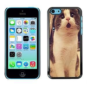Dragon Case - FOR iPhone 5Cs - being too strong - Caja protectora de pl??stico duro de la cubierta Dise?¡Ào Slim Fit
