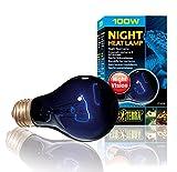night heat lamp bulb - Exo Terra Night Heat Lamp 100w