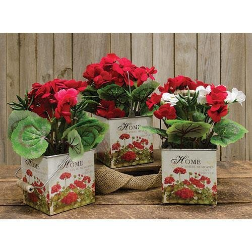 Heart of America Assorted Designed Geraniums In Designer Pots - Set of 3