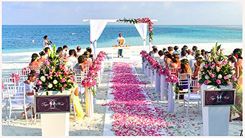 ocharzy 1000pcs Silk Rose Petals Wedding Flower Decoration (Champagne)