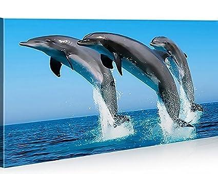 Quadro moderno Delfines delfín Impresión sobre lienzo ...