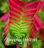 20 Colors 100 pc/pack stone flower Seeds ice-plant seeds ailanthus mosquito repellent bundle fleshier plant seeds mosquito repel