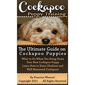 Cockapoo puppy training: the ultimate guide on cockapoo puppies.