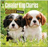 Cavalier King Charles Spaniel Puppies 2015 Square 12x12