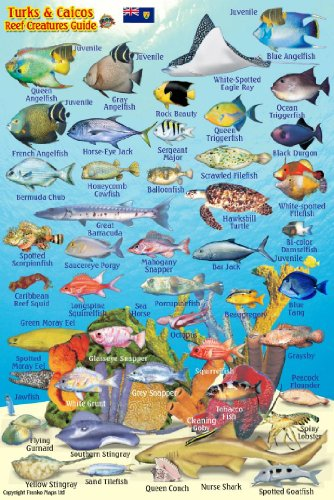 - Turks & Caicos Coral Reef Creatures Guide Franko Maps Laminated Fish Card 4