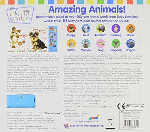 The 8 best amazing animals book