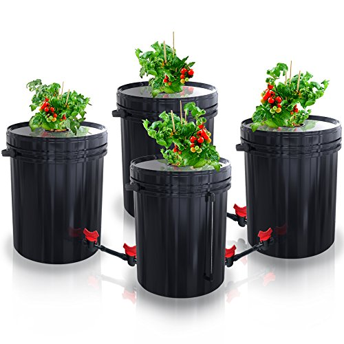 New SavvyGrow DWC Hydroponics Growing System-Kit - Large 5 Gallon Bucket w/Air Pump, Airstone - Complete Hydroponic Setup for Indoor Tomatoes, Peppers, Melons, Beans - Grow Super Fast at Home (4 Bucket) Hydroponic System 19