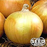 buy Texas Grano 502 Onion Seeds - 200 Seeds NON-GMO now, new 2019-2018 bestseller, review and Photo, best price $1.95