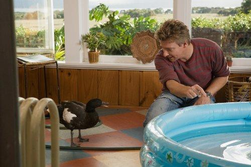Love Birds Ente Gut Alles Gut Amazon De Rhys Darby Sally Hawkins Bryan Brown Paul Murphy Dvd Blu Ray