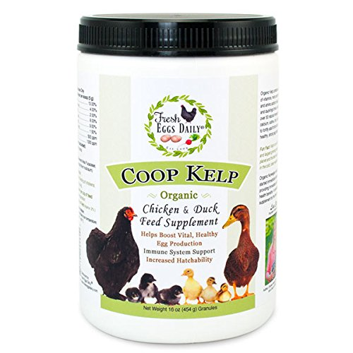 Fresh Eggs Daily Coop Kelp Organic Chicken and Duck Feed Supplement 1LB