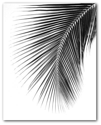 Palm Leaf Print, Black and White Tropical Leaf, 8 x 10 Inches, Unframed