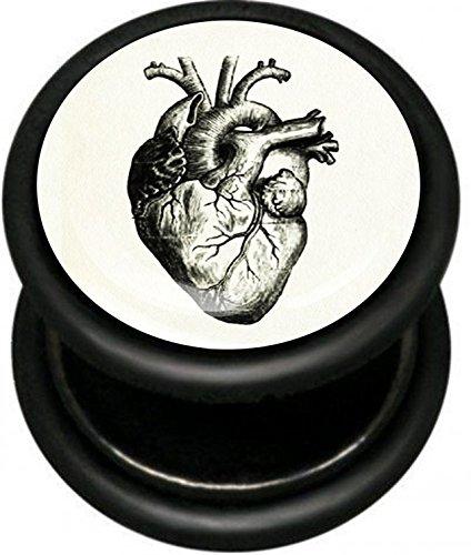Dilatador Falso - 1,2 mm grosor de la barra - corazón humano ...