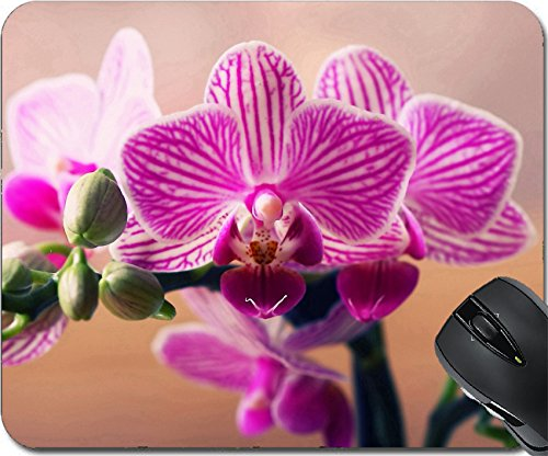 MSD Mousepad Mouse Pads/Mat design 35341574 Orchid (Growing Phalaenopsis Orchids)