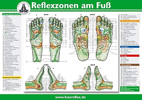 Reflexzonen am Fuß (A4)