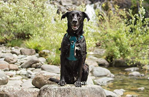 Embark Pets Arnés para Mascotas Grande (79-104 cm, Azul): Amazon ...