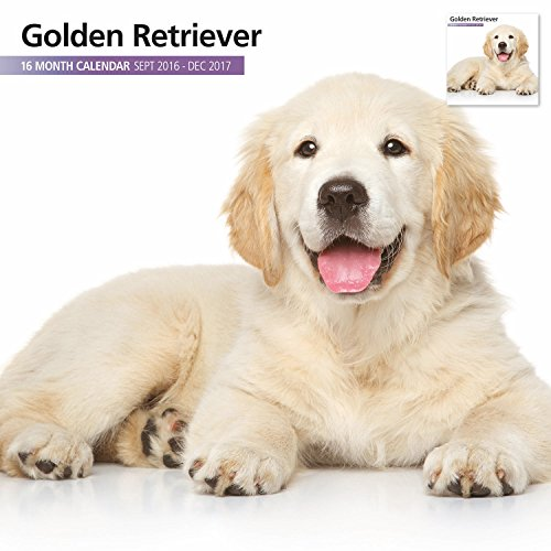 Magnet & Steel 2017 Golden Retriever Calendar, Wall Calendar