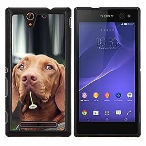 Raza del perro de Vizsla canina flor linda del animal doméstico- Metal de aluminio y de plástico duro Caja del teléfono - Negro - Sony Xperia C3 D2533 / C3 Dual D2502