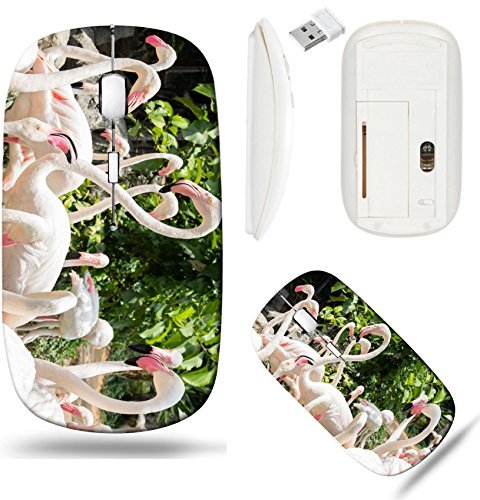 Liili Wireless Mouse White Base Travel 2.4G Wireless Mice with USB Receiver, Click with 1000 DPI for notebook, pc, laptop, computer, mac book IMAGE ID: 20239104 flamingo in zoo Chiang (Chiang Mai Zoo)