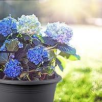 wetterfestes Pflanzgef/ä/ß aus UV-best/ändigem Kunststoff grau 15 cm Durchmesser x 11 cm dunkel anthrazit Floralo Blumentopf Cilindro rund