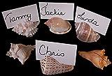 Set of 36 Genuine Seashell Place Card Holders Beach Wedding Favor Nautical Party Decor Sea Shell Table Sets