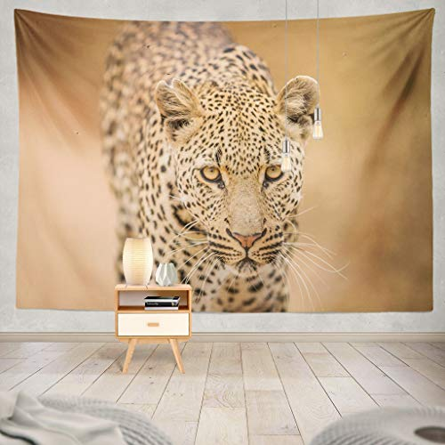 KJONG Leopard Camera National Park South Africa Africa South Wildlife Leopard Animals Cat Nature Decorative Tapestry,60X60 Inches Wall Hanging Tapestry for Bedroom Living -