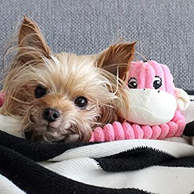 ZippyPaws-Spencer-The-Crinkle-Monkey-Dog-Toy-Squeaker-and-Crinkle-Plush-Toy