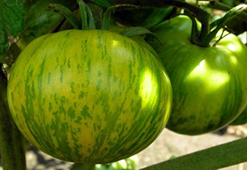 unusual tomato seeds - 5