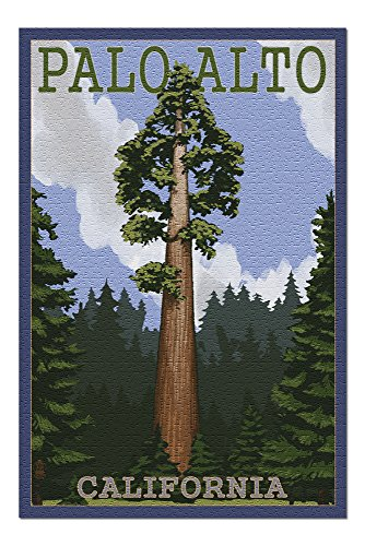 Palo Alto, California - California Redwoods (20x30 Premium 1000 Piece Jigsaw Puzzle, Made in USA!)