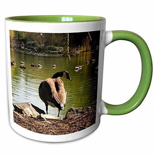 3dRose Krista Funk Creations Migratory Birds - Canada Goose Watching Ducks Swim - 11oz Two-Tone Green Mug - Swim Outlet Canada