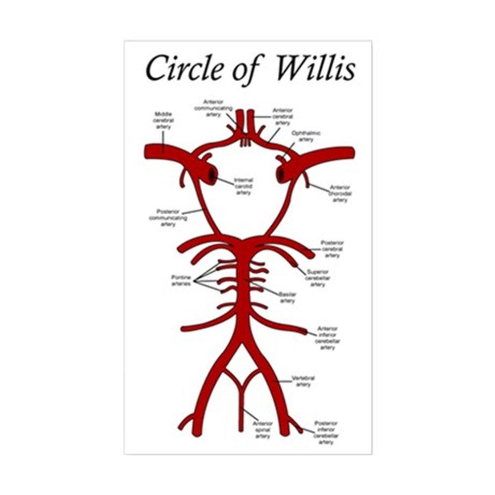 Amazon Cafepress Circle Of Willis Sticker Rectangle Rectangle